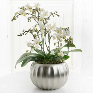 orchid plant delivery by post