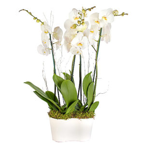 Winter Orchid Planter